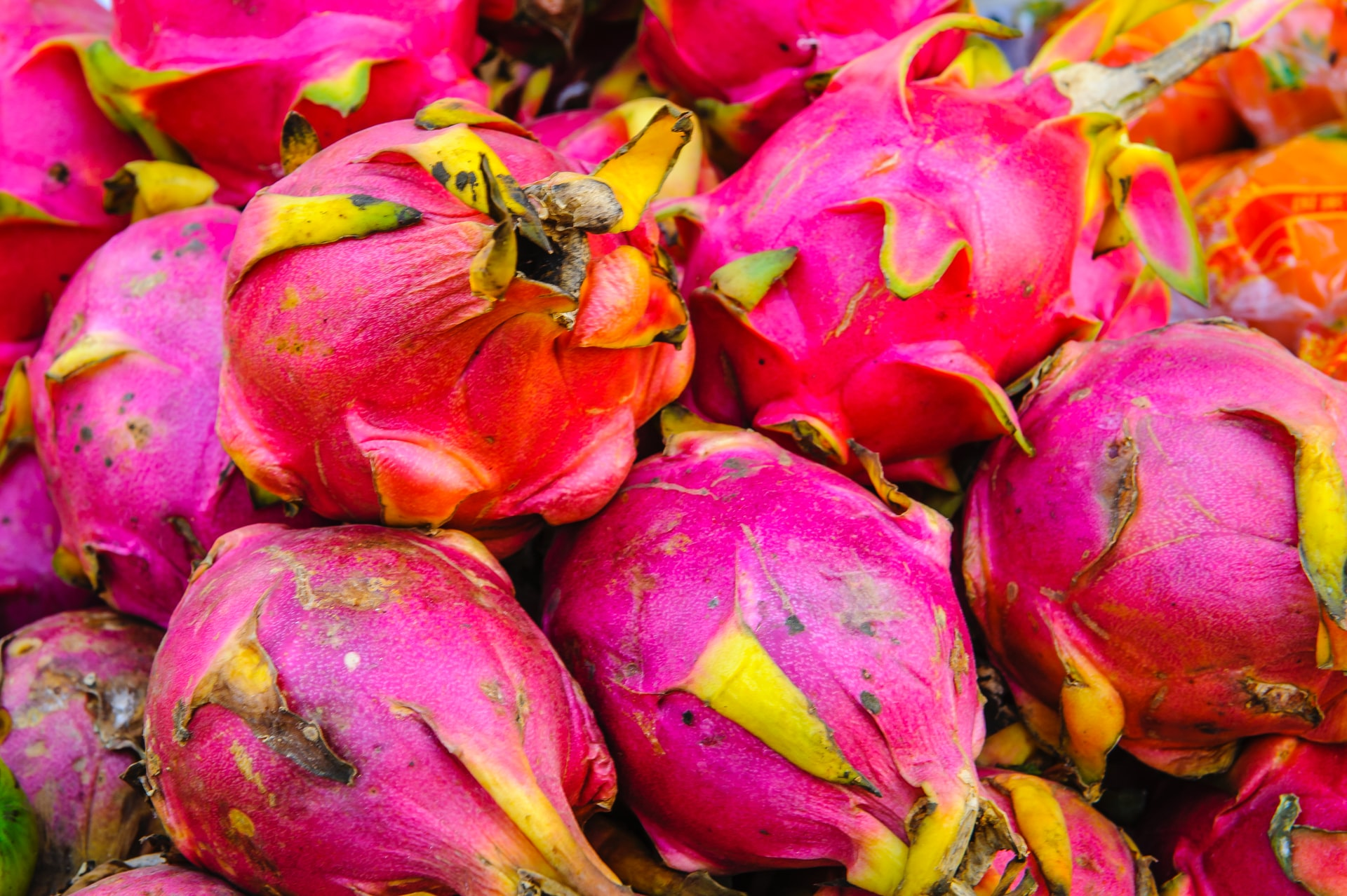 Climatic requirement for Dragon fruit cultivation