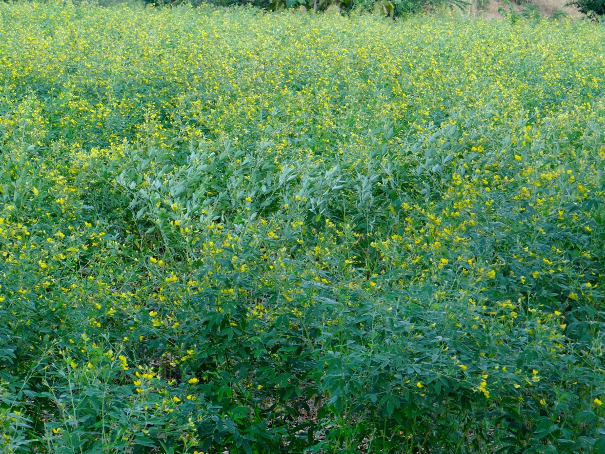 Suitable Seed rate & Sowing time for Pigeon pea