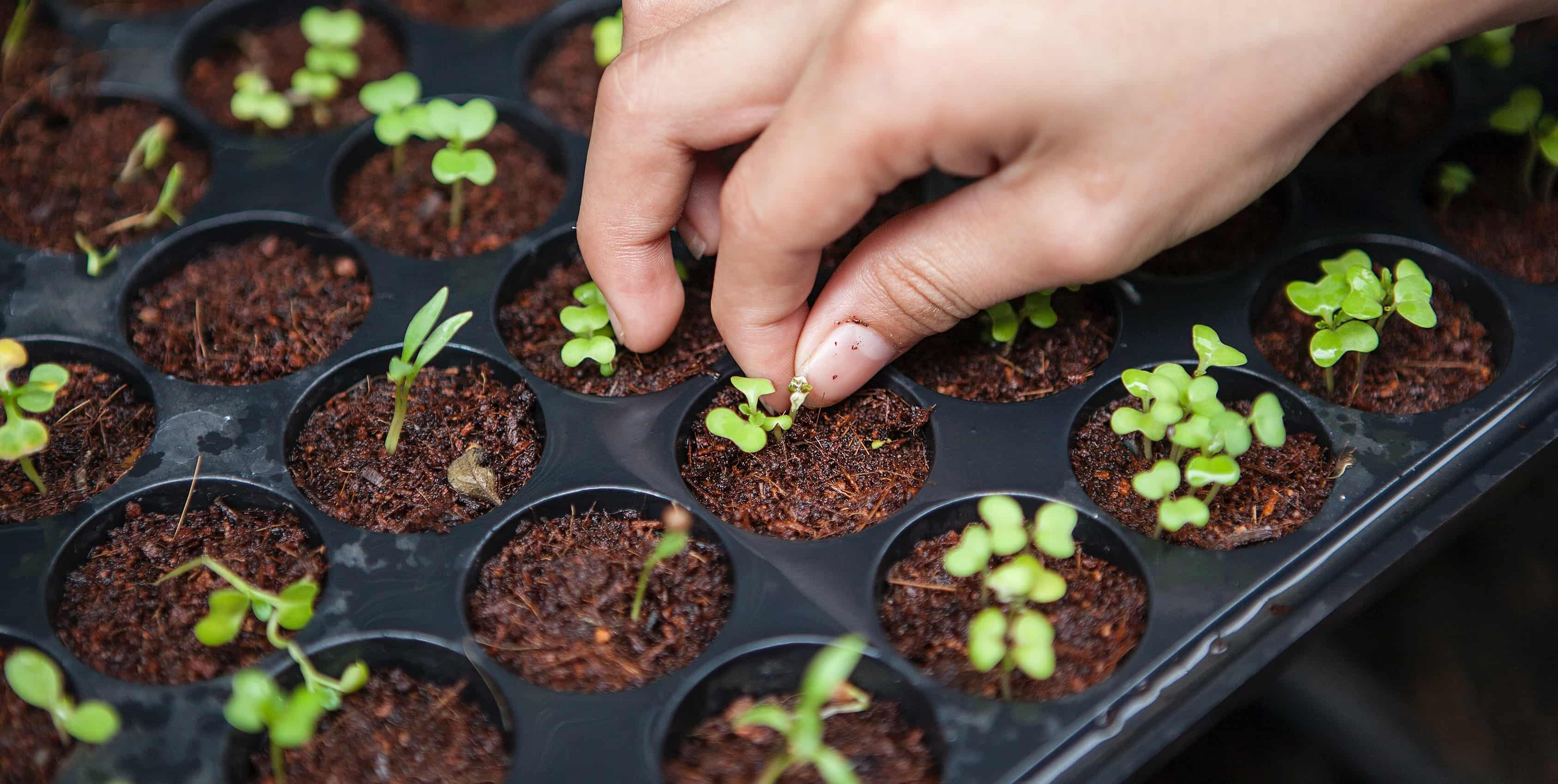 Why Rooftop farming is best solution for Urban Agriculture?
