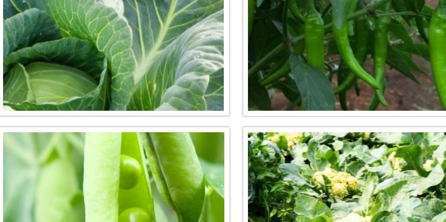Tips for successful vegetable production